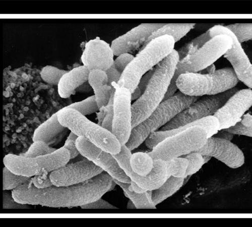 YM菌超高温好氧发酵技术